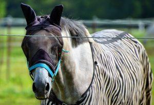 Insektenschutz für Pferd und Reiter