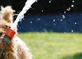 Hitzewelle: coole Tipps, wie Ihre Tiere die hohen Temperaturen überstehen