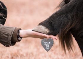 Die richtige Hufpflege für Ihr Pferd