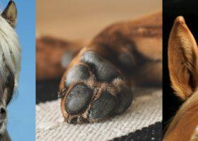 BALLISTOL Animal Tierpflegeöl – ein wahrer Alleskönner unter den Tierpflegeprodukten!