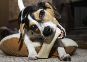 Die richtige Zahnpflege bei Hunden