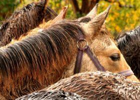 Ab wann brauchen Pferde eine Regendecke?