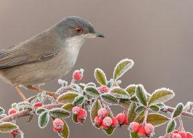 Wildvogelfütterung im Winter