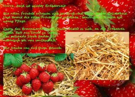 Hurra, bald ist wieder Erdbeerzeit – für Ihre Erdbeeren haben wir passendes Stroh im Angebot